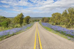 Along a colorful backroad in the Texas  Hill Country, bluebonnets fill the roadsides on a wonderful spring morning.